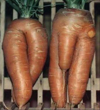 sexy-carottes.jpg