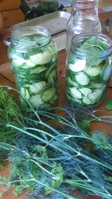Faire des conserves de pickles avec concombres frais
