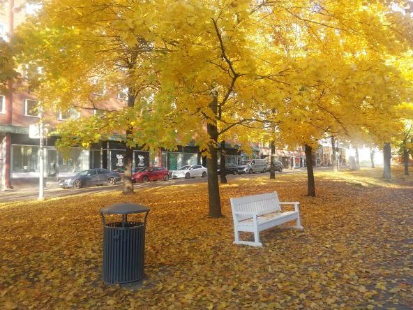 automne-banc-poubelle.jpg